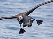 Những vũ điệu tán tỉnh kỳ quặc của loài chim