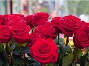 """Ngạc nhiên khi hoa hồng biến thành """"robot"""""""