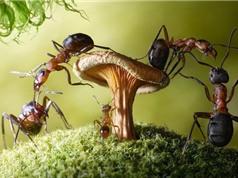 Loài kiến và những thông tin thú vị