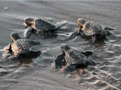 Những động vật nguy cơ tuyệt chủng vì biến đổi khí hậu