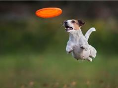Những chú chó đáng yêu và màn bay lượn siêu hài hước
