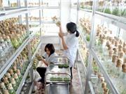 Chuyển TT Khoa học & Sản xuất Lâm Nông nghiệp thành doanh nghiệp KH