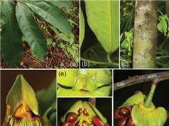 Phát hiện loài thực vật mới ở Khánh Hòa