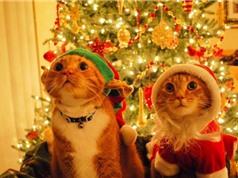 Chết mê động vật diện đồ Noel phấn khích đón Giáng sinh