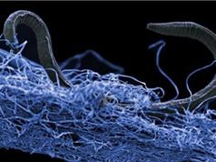 Những loài ẩn mình nghìn năm sâu trong lòng Trái Đất