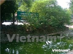 Hà Nội nỗ lực cải tạo môi trường nước, làm sạch các tuyến sông