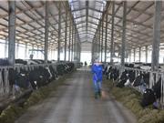 Tỷ phú Việt chi mạnh cho khoa học để... trồng rau, nuôi bò