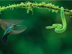 Những khoảnh khắc kỳ thú nhất trong thiên nhiên hoang dã