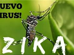 Bộ Y tế cảnh báo virus ăn não do muỗi truyền ở Việt Nam