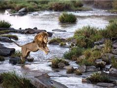 """Chùm ảnh """"độc"""" về động vật hoang dã tại Maasai Mara"""