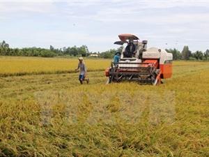 Tài trợ 66 tỷ đồng để làm chủ công nghệ chọn tạo giống lúa mới