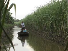 Đồng bằng sông Cửu Long sẽ phải đắp đê biển vì biến đổi khí hậu?