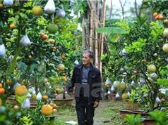 """Cây trồng 10 loại quả """"siêu lạ"""" của lão nông Hà Nội"""