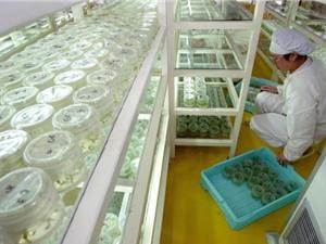 Những vấn đề còn tồn tại của khoa học Trung Quốc dưới góc nhìn báo Tây