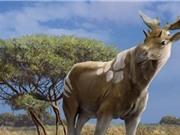 Diện mạo kỳ lạ của tổ tiên loài hươu cao cổ
