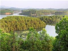 Tiến tới cấp chứng chỉ quản lý rừng bền vững cho 500.000ha rừng