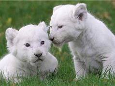 Chiêm ngưỡng 10 thú cưng đắt giá nhất hành tinh