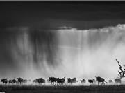 Ngắm bộ ảnh đen trắng tuyệt đẹp về động vật hoang dã