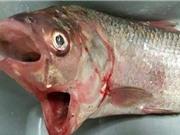 """Bắt được cá """"ngoài hành tinh"""" đi bộ dưới đáy biển"""