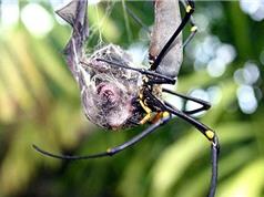 Khám phá bí ẩn ít biết về loài nhện