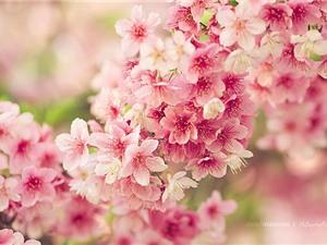 Ngắm vẻ tuyệt mỹ của các loài hoa đẹp nhất thế giới