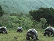 Những sự thật thú vị về tuổi thọ của loài rùa