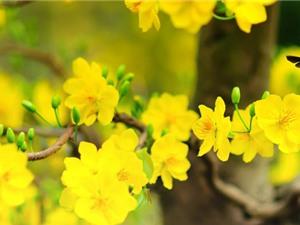 Những loài hoa ngày Tết nên chưng trong nhà để đón tài lộc