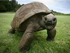 Những con rùa có tuổi thọ cao nhất trên thế giới
