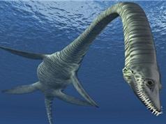 Nước Anh tìm thấy hóa thạch của loài khủng long mới