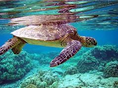 Những khám phá bất ngờ về loài rùa