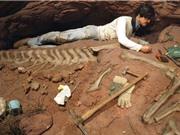 Phát hiện hóa thạch khủng long khổng lồ, lạ tại Argentina