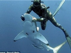 Liều tính mạng, thợ lặn gỡ lưỡi câu trong miệng cá mập