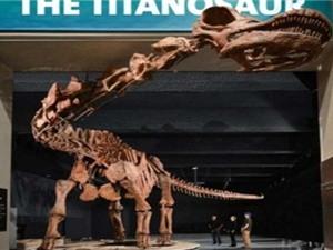 Phục dựng khủng long lớn nhất thế giới