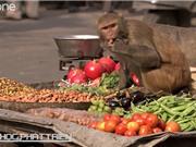 Những sự thật khó tin về loài khỉ