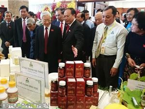 Đông trùng hạ thảo made in Việt Nam ra đời như thế nào?