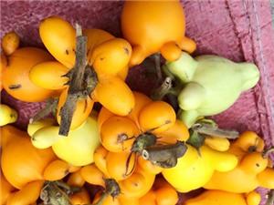 Chất độc chết người trong trái dư bày mâm ngũ quả
