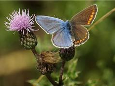 Chùm ảnh màu lông đối xứng tuyệt đẹp ở động vật