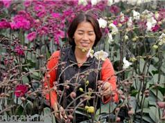 """Đôi vợ chồng """"gàn"""" ở Hưng Yên trồng lan công nghệ cao"""