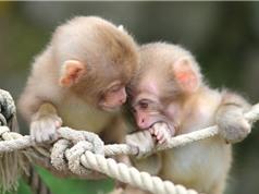 Những khoảnh khắc cực kỳ dễ thương của loài khỉ