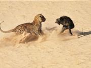 """Những trận đại chiến """"kinh hoàng"""" giữa khỉ và các động vật khác"""