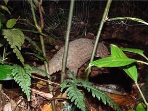 16 con tê tê được trả về tự nhiên