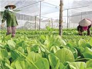 Gian nan nông nghiệp công nghệ cao