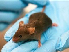 Liệu pháp gene cuối cùng chữa được bệnh tự kỷ