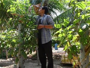 Trồng ớt trên trụ nhựa - cách làm sáng tạo của một nông dân Khánh Hoà