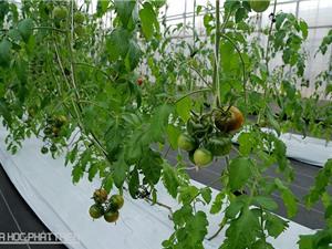 Nông nghiệp số sẽ giải quyết bài toán an toàn thực phẩm