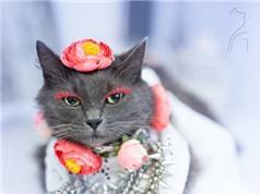 Hành trình nổi tiếng của cô mèo quyến rũ nhất thế giới