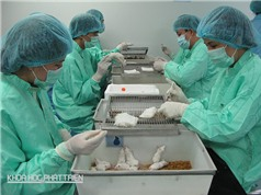 Việt Nam hướng đến hạn chế tối đa phản ứng phụ từ vắcxin