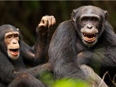 Lòng tin bạn bè đã xuất hiện ở loài tinh tinh