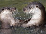 Những hình ảnh về động vật hoang dã đẹp nhất trong tuần qua