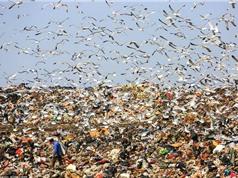 """Hàng nghìn con mòng biển """"chiếm"""" bãi rác để tìm thức ăn"""